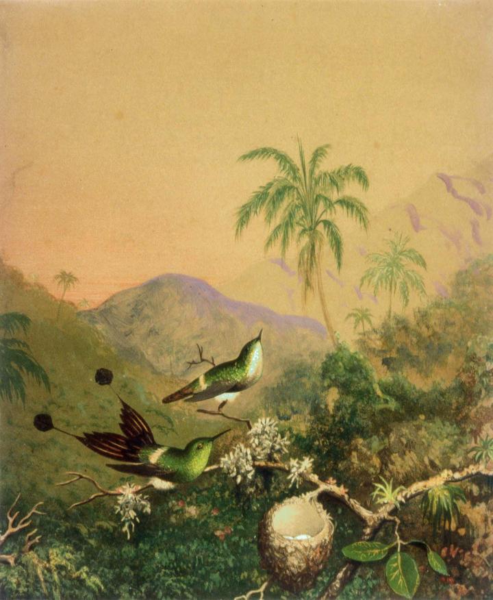 06hummingbirds